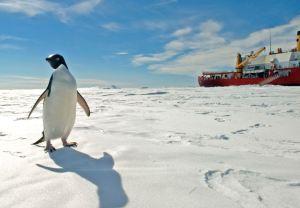 A Penguin Photobombs The US Coast Guard